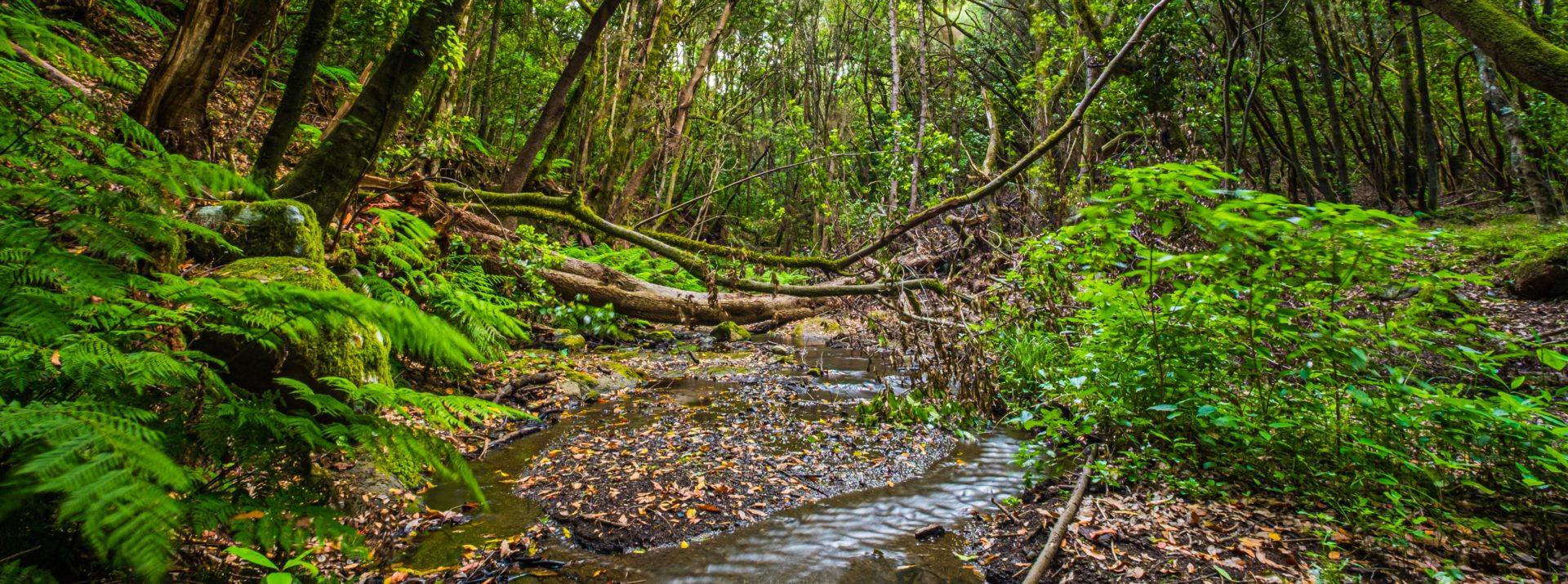 Sumérgete en el misterio del bosque milenario